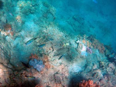 サンゴ礁植樹
